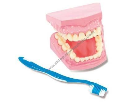 Dantų priežiūros modelis