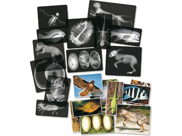 Gyvūnų laboratorija, rentgeno nuotraukos