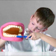 Dantų modelis XXL