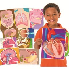 """Edukacinės kortelės """"Mano kūno dalys"""""""