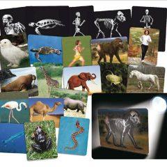 Egzotiniai gyvūnai – rentgeno kortelės